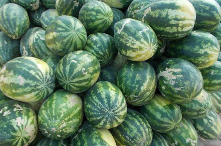 Myanmar will start export seedless watermelon to Dubai market in the early of December 2020