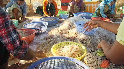 Yangon Regional Government will take an action to crack down on illegal seafood imports from Thailand
