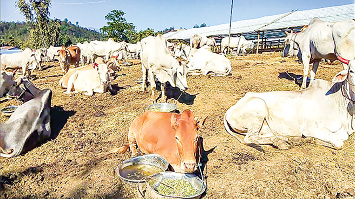 Myanmar's exports of cattle, animal products down by USD $ 254.3 million in the first ninth months of current fiscal year