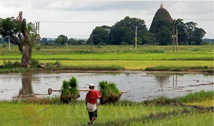 Myanmar plans to borrow USD $ 200 million from the World Bank to assist rehabilitation farmers after COVID – 19 pandemic