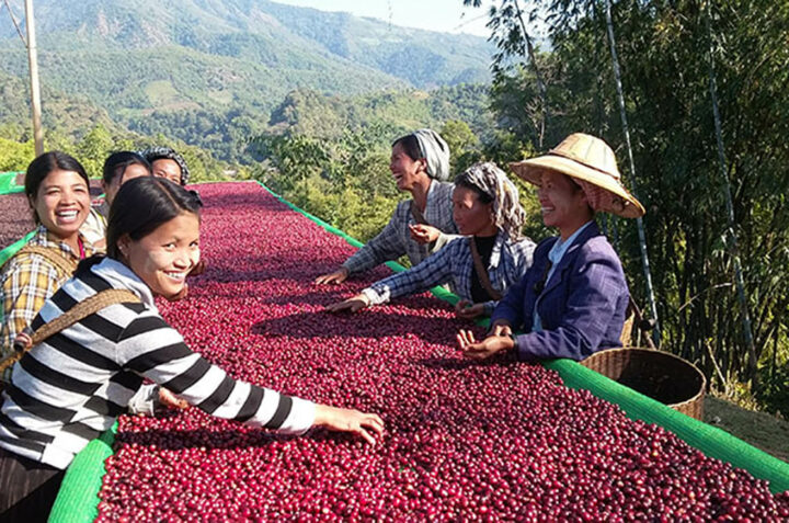 Myanmar's coffee exports have fallen by the half of this year due to the weak demand from foreign market by the coronavirus