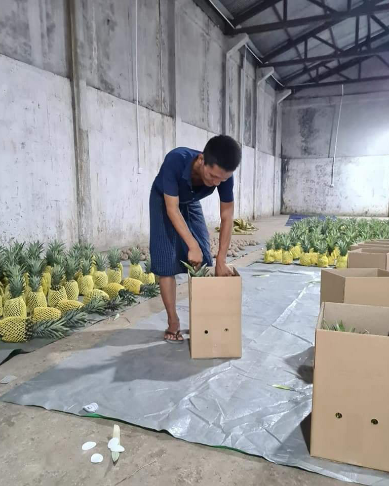 Myanmar's pineapple exporters called for legitimate trade channel for export which still suspended this year due to the COVID – 19