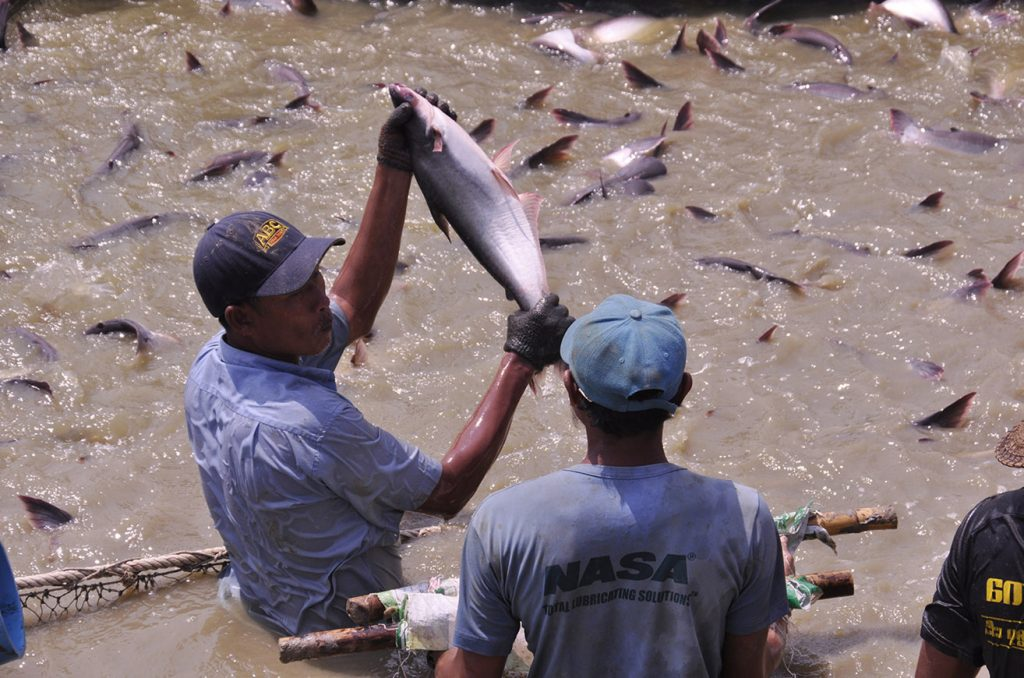 The export earnings from the fishery industry reached USD $ 733.8 million as of 17 July in the 2019 – 2020 financial year