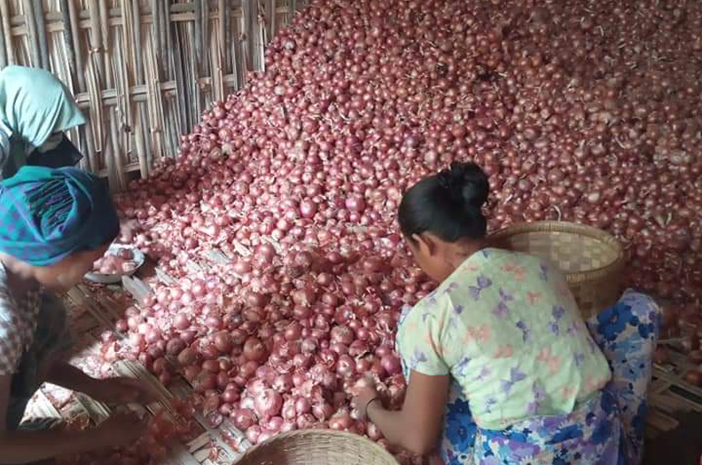 Local onion growers are facing the difficulties with their onion cultivation businesses due to the significant decline of foreign demand during the outbreak
