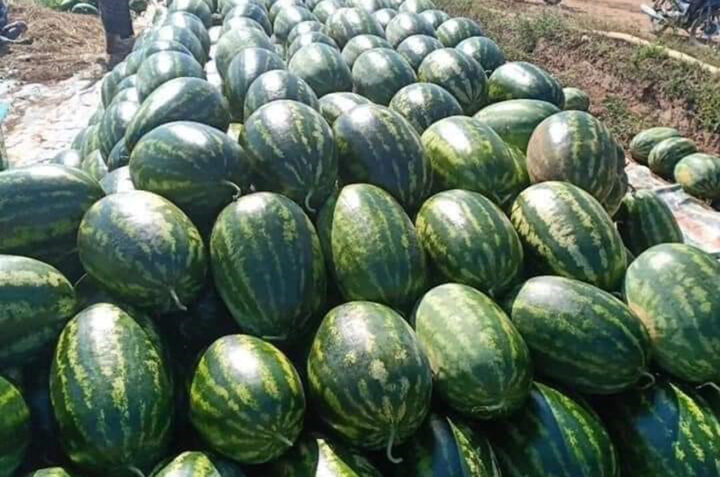 The price of watermelon exported to China reached the highest level in the seven years
